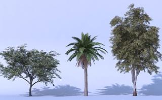 Trees singles