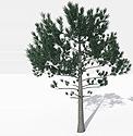 Trees e Plants