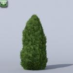 Green Giant Arboritae